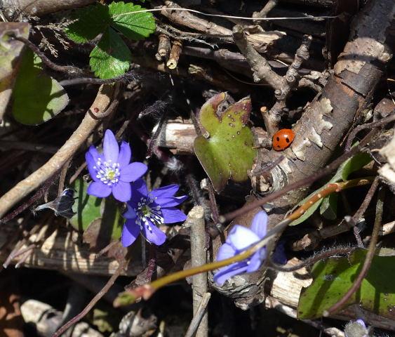 Vårett