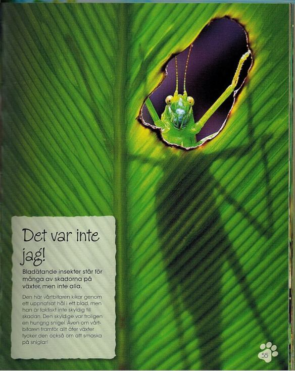 djur-bok-1